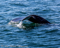 Humpback atlantic beach AP GW facebook